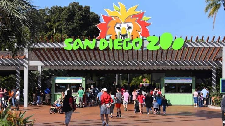 Vários gorilas do zoológico de San Diego testam positivo para coronavírus