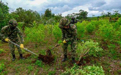 Como Colômbia produz mais cocaína apesar de redução da área de cultivo